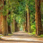 PannKa szabadtéri mesés sétája 05.16-05.30
